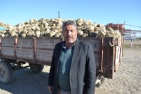 Şuhut'ta Şeker Pancarı Alımları Başladı