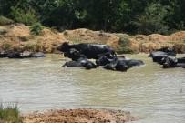 Tekirdağ'da Hayvancılık Alanında Büyük Atılım