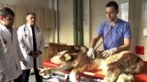 Hayvan Hastanesinden Ekonomiye 'Buzağı' Katkısı