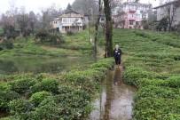 SAĞANAK YAĞIŞ - Rize'de Şiddetli Yağmur Nedeniyle Tarım Arazilerini Ve Bir Evi Su Bastı