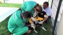 Yaralı Sokak Hayvanlarına Masajlı Ve Havuzlu Tedavi