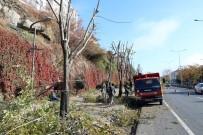 KIŞ MEVSİMİ - Yozgat'ta Ağaçlar Kışa Hazırlanıyor