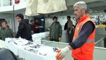 AVCILIK - Batı Karadeniz'de Hamsi Sezonu Bereketli Başladı