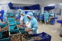 SOĞUK HAVA DEPOSU - Bilecik'ten Fransa'ya 5 Milyon Dolarlık Salyangoz İhracatı