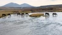 Yılkı Atları Doğal Ortamda Görüntülendi