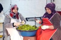 SÜLEYMAN ELBAN - Ağrılı Kadınlar Günde 1,5 Ton Turşu Üretiyor