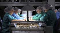 TARIM ÜRÜNÜ - Aile Şirketinin Fındıklı Ürünleri Dünyanın Dört Bir Yanında