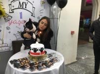 DOĞUM GÜNÜ PARTİSİ - Çok Sevdiği Köpeğinin Birinci Yaşını Doğum Günü Pastası İle Kutladı