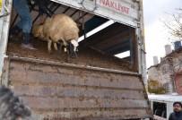 BÜYÜKBAŞ HAYVAN - Darende'de Genç Çiftçilere Destekler Sürüyor