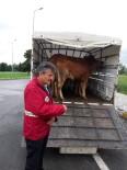HAYVAN PAZARI - Hayvan Ve Hayvansal Ürün Hareketlerine Denetim