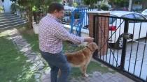 İŞİTME ENGELLİ - Köpeğin Apartmandan Tahliyesi Yargıtaydan Döndü