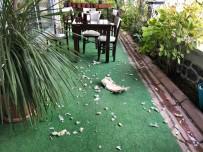 Aç Kalan Köpekler Kafeteryanın Sandalyelerini Parçaladılar