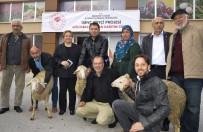 HAYVANCILIK - Genç Çiftçiler Hibe Küçükbaş Hayvanlarını Kavuştu