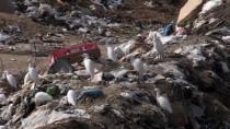ÇEVRE KIRLILIĞI - İsrail Çevre Kirliliğini Gazze Halkına Karşı Silah Olarak Kullanıyor