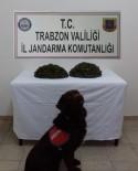 Jandarmanın Narkotik Köpeği 'Çakıl' Uyuşturucu Operasyonunda Dedektör Görevinde