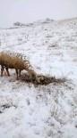 Koyun Kar Üzerinde Doğum Yaptı