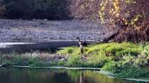ORMAN VE SU İŞLERİ BAKANLIĞI - Manisa'da Yaralı Göçmen Kuş Tedavi Altına Alındı