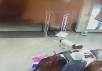 Tişört Hırsızı Köpek Çıktı