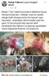 KÖY MUHTARI - Adana'da Kurtlar Küçükbaş Hayvanlara Saldırdı