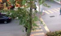 YAVRU KEDİ - Ağaçta Mahsur Kalan Kediyi Kedi Gibi Ağaca Tırmanıp Kurtardı