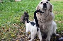 Anneleri Telef Olan Kedilere 'Pamuk' İsimli Köpek Sahip Çıktı