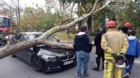 FLORYA - (Özel) Ağaç Seyir Halindeki Aracın Üzerine Devrildi, Anne Oğul Ölümden Döndü