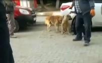 USULSÜZLÜK - Sohayko'dan Mecitözü'nde Usulsüz Köpek Toplanmasına Tepki