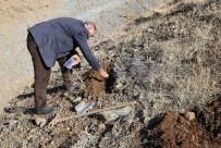 Ters Lale Tohumları Toprakla Buluştu