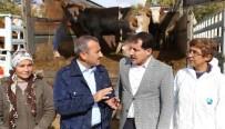 HAYVAN - Tunceli'de Genç Çiftçilere 400 Düve Hibe Edildi