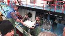 TÜRKİYE - Akçakoca'da Hamsi Bolluğu
