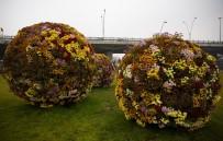 CUMHURİYET MEYDANI - Kasım Ayında Dahi Çiçek Bahçesi