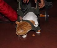 ASIM KOCABIYIK - (Özel)  Lise Öğrencilerinden Engelli Kedilere Yürüteç