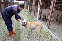REHABILITASYON - Sokak Hayvanları Sahipsiz Bırakılmıyor