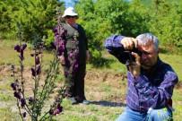 ENDEMIK - Amasya Bitki Örtüsü Zengini