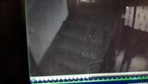 NENE HATUN - Apartmandaki Ayakkabı Hırsızlığı Kameraya Yansıdı