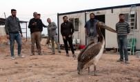 HAYVAN SEVGİSİ - İşçilerin Duyarlılığı Pelikanın Hayatını Kurtardı