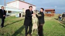 'Kangal Köpeğini Hak Ettiği Yere Getireceğiz'