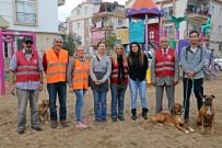 PARA ÖDÜLÜ - Patileri Kesilen Köpeği Öldüreni İhbar Edene Para Ödülü