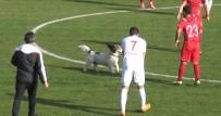 KÖPEK - Sahaya Giren Köpek Maçın Durmasına Neden Oldu