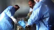 REHABILITASYON - Şırnak'ta Yaralı Baykuşlara Rektörden Cerrahi Müdahale