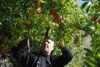 YAZ MEVSİMİ - Bitlis'te Nar Hasadı Yapılamadı