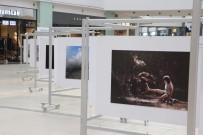 İZZET KERIBAR - Doğanın Enerjisi Fotoğraf Sergisi Halka Açıldı