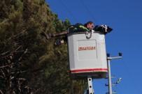 YÜKSEK GERİLİM - Kozalak Toplayan Adam Elektrik Akımına Kapılarak Öldü