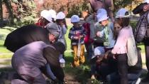 BOTANİK BAHÇESİ - Minik Öğrencilerden TBMM Botanik Bahçesi'ne Ziyaret