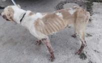 SOKAK KÖPEĞİ - O Köpek Artık 200 Koyunun Bekçisi