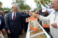 SEDDAR YAVUZ - Ordu'da 'Kivi Hasat Şenliği'
