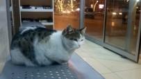 Soğuk Havada Kedi Otobüs Durağına Sığındı