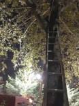 Ağaçta Mahsur Kalan Kediyi İtfaiye Kurtardı