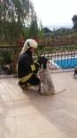 KARADERE - Balkon Korkuluğa Sıkışan Köpeği İtfaiye Kurtardı