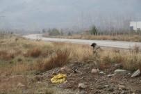GÜVENLİKÇİ - Canice Vurulan Talihsiz Köpek Öldü